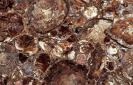 Brown-Petrified-Wood